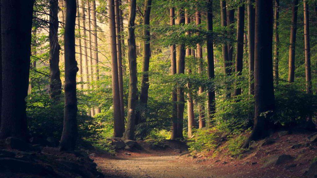 Bosque Ambiente Naturaleza