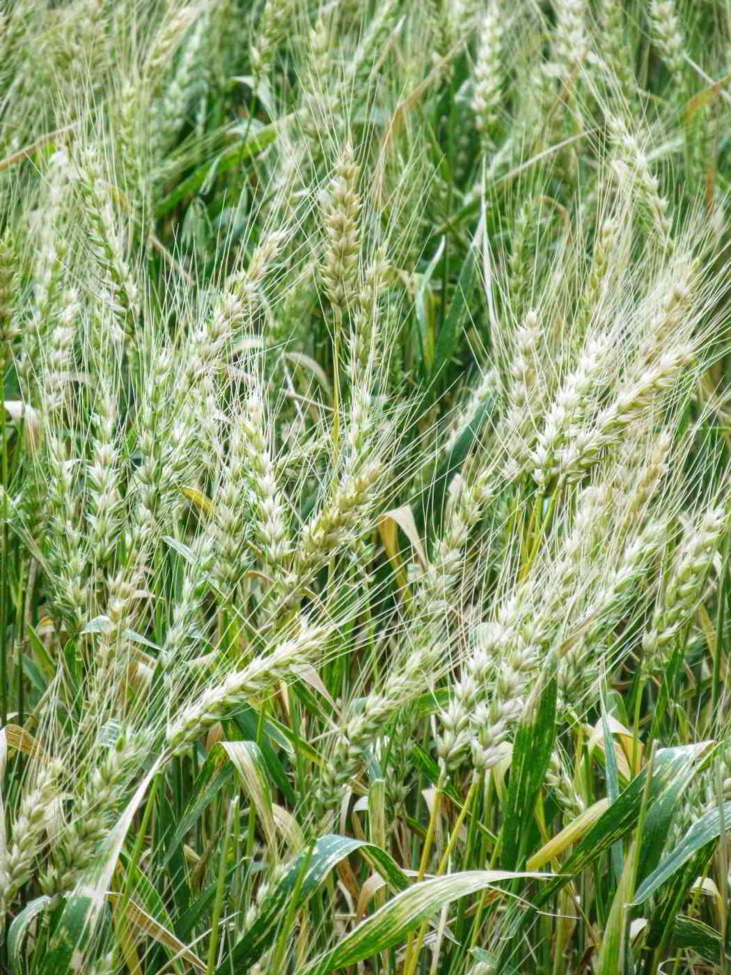 Agronomia Campo
