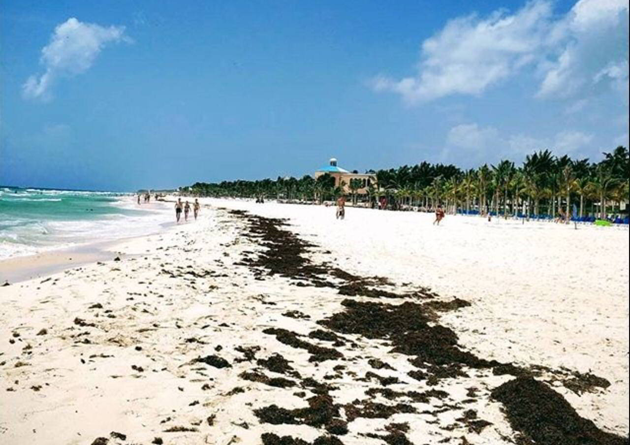 Sargazo Playa del Carmen Caribe Mexico Clima