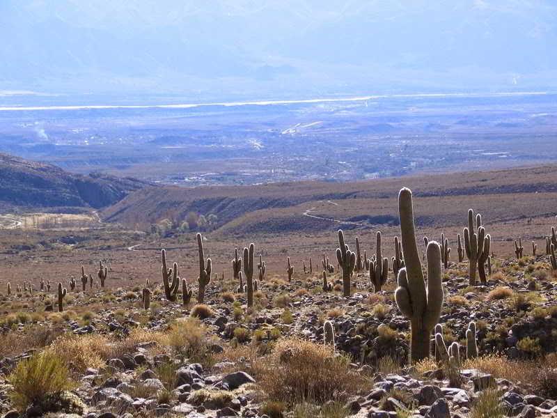 Regiones Monte Bioma Argentina Tucuman