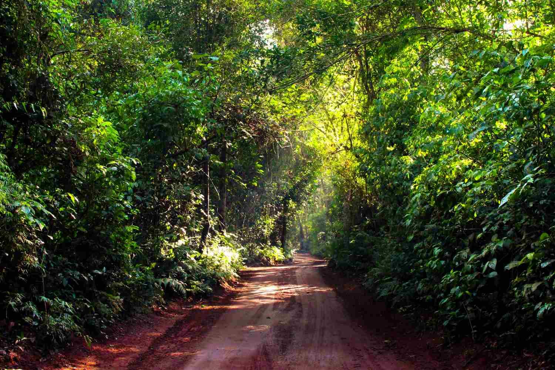 Selva Misiones Iguazu Argentina 7 Maravillas