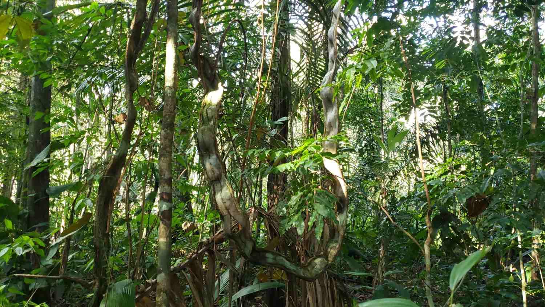 Amazonas Brasil 7 Maravillas del Mundo
