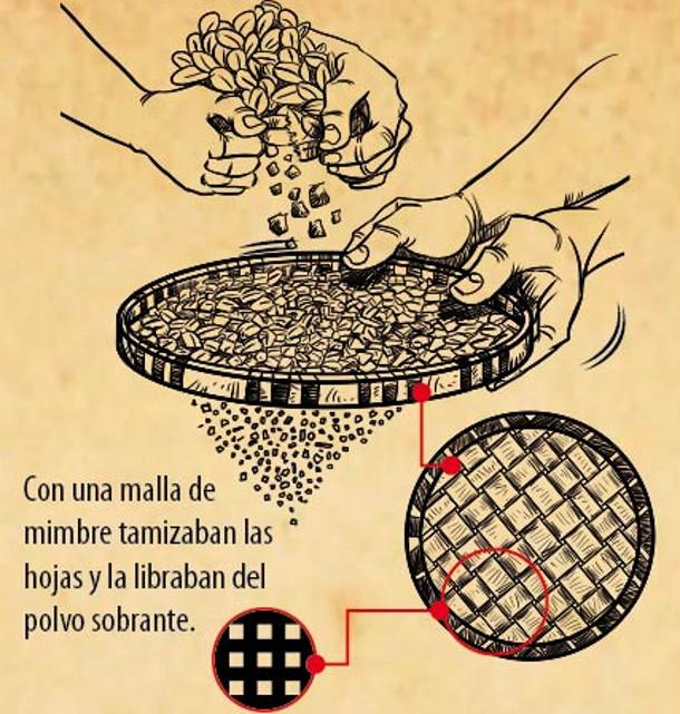 Producción Yerba Mate Guaraníes